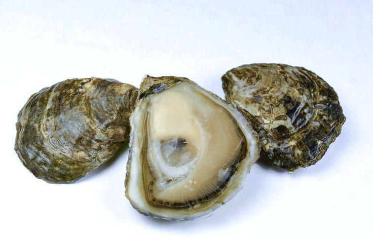 Olympia Oysters - Taylor Shellfish