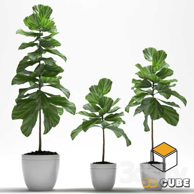 32  Plants 3D Models Free Download About the Model: 32