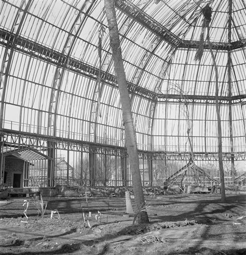Berlin 1945. Das große Tropenhaus im botanischen Garten.