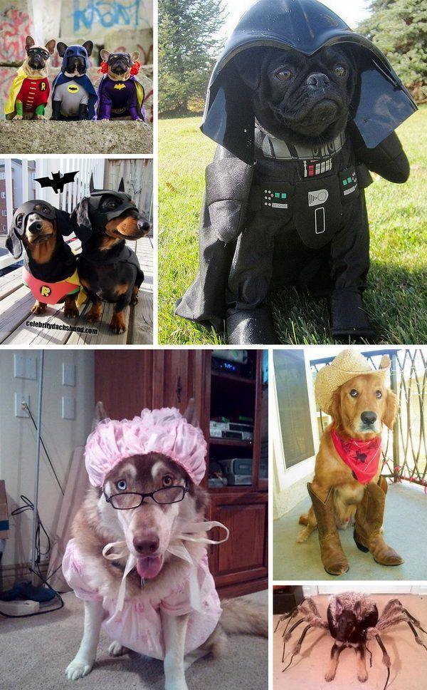 30 Dog Halloween Costumes Cute Dog Halloween Costumes Dog Halloween Costumes Pet Halloween Costumes