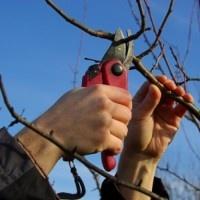 Lees meer: Tuin winterklaar maken