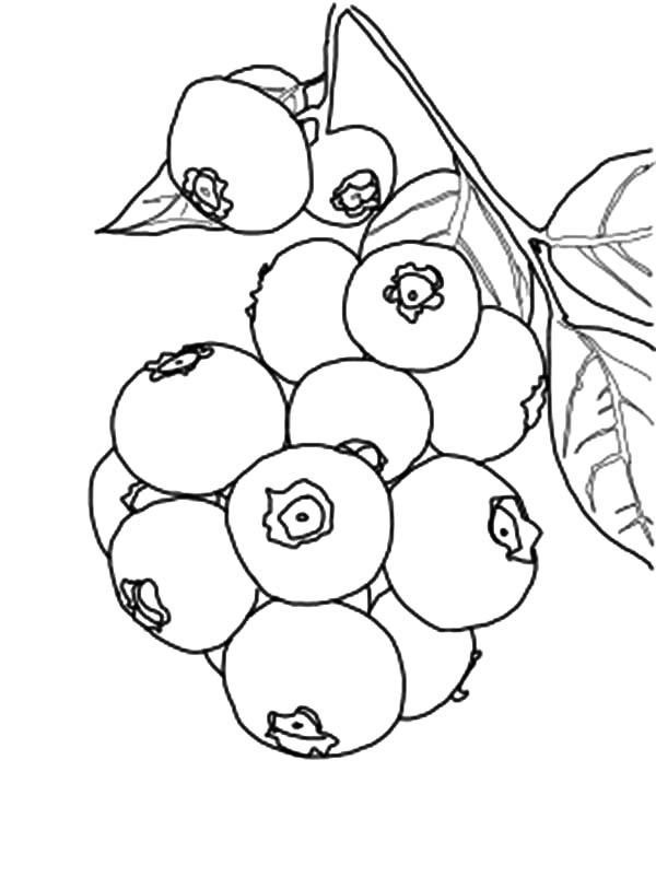 Blueberry Coloring Page Free Blueberries Are Small Fruit Rich Fruits That Are Rich In Benefits This Coloring Pages Fruit Coloring Pages Free Coloring Pages