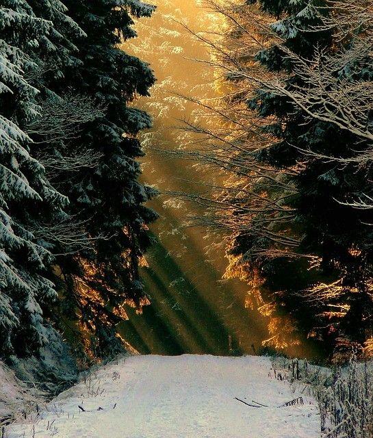02./03.12 - 08.-10.12. - 16./17.Dezember 2017 - Sand in Taufers / Reinbach-Wasserfälle - Weihnachtszauberwald bei den Wasserfällen - Ein Vorweihnachtlicher Spaziergang zu den Reinbach Wasserfällen, entlang an kleinen, liebvoll geschmückten Hütten mit Glühwein, Gebäck und einiges mehr. Für weitere Infos und Veranstaltungen hier klicken: http://dorftirol.beeplog.de/786258_5314845.htm