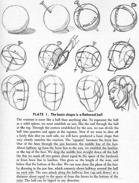 Best 25 Andrew Loomis Ideas