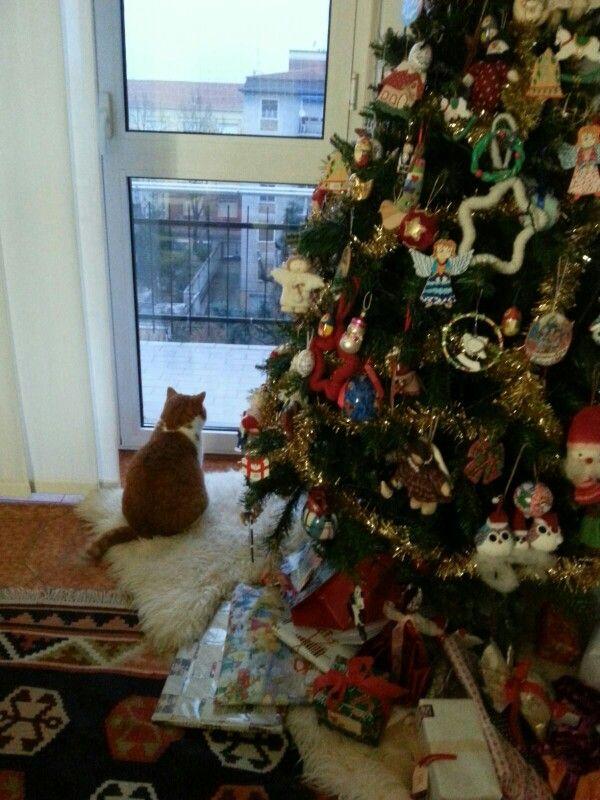 Qualcuno controlla se sta arrivando Babbo Natale. ..