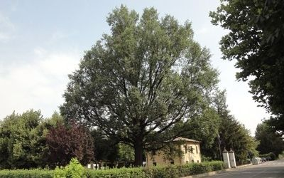 Sono una trentina gli alberi di raro pregio presenti a Modena. Si tratta di veri e propri monumenti verdi collocati in diversi punti della città. Il più antico il cedro del Libano di villa Montecuccoli. Il Comune per effettuare un censimento completo invita anche a segnalare quelli in aree private
