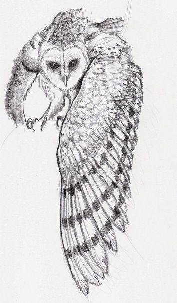 совы рисунки картинки