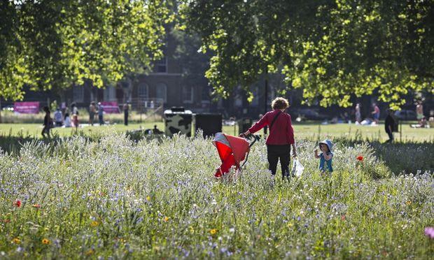 A urban meadows at London Fields, Hackney, London