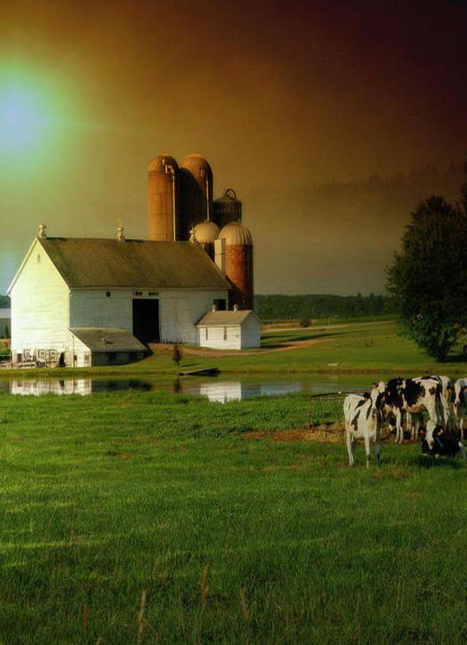 White Barn                                                                                                                                                                                 More