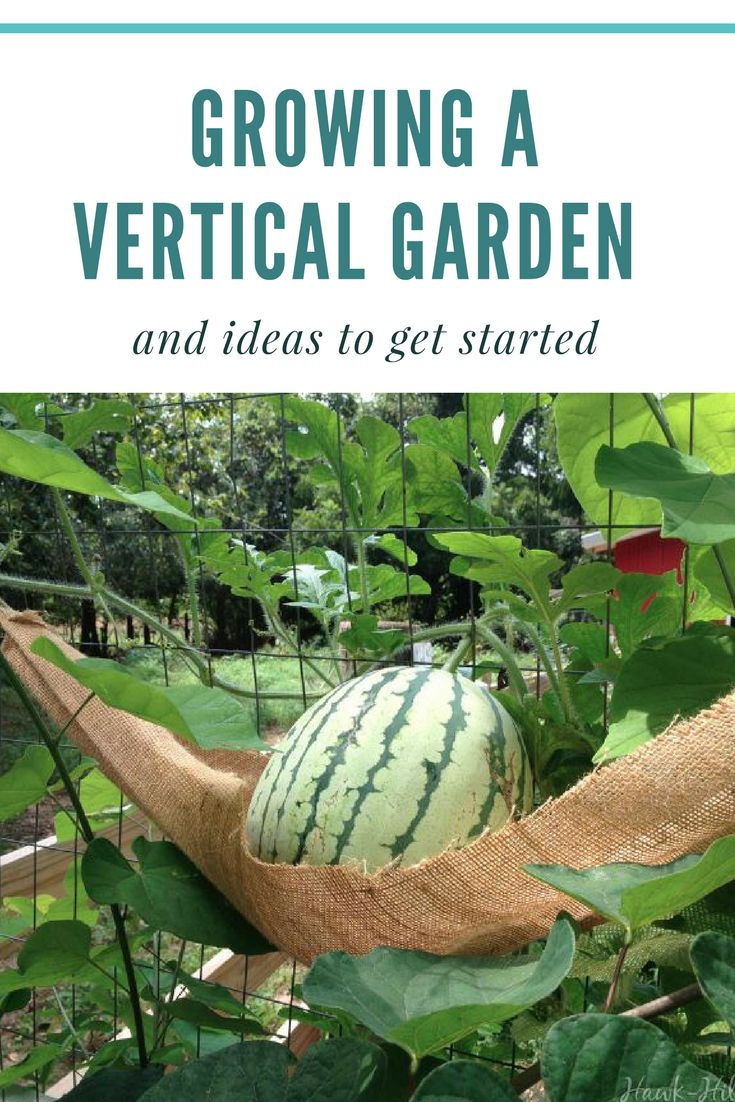Growing a vertical garden and ideas to get you started - I love these vertical garden ideas! Do you have any others while we wait for Spring to come?