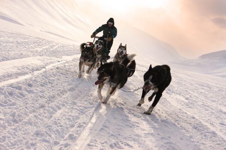 Os trenós de cães são um dos modos de transporte mais comuns no Árctico. Desde a Gronelândia, passando pelo Canadá, Lapónia, Alasca e Svalbard, esta forma de locomoção é amplamente usada, quer pela população local, quer para passeios turísticos. Os cães fazem parte da cultura do Árctico. Ao contrário do que se passa na maioria …