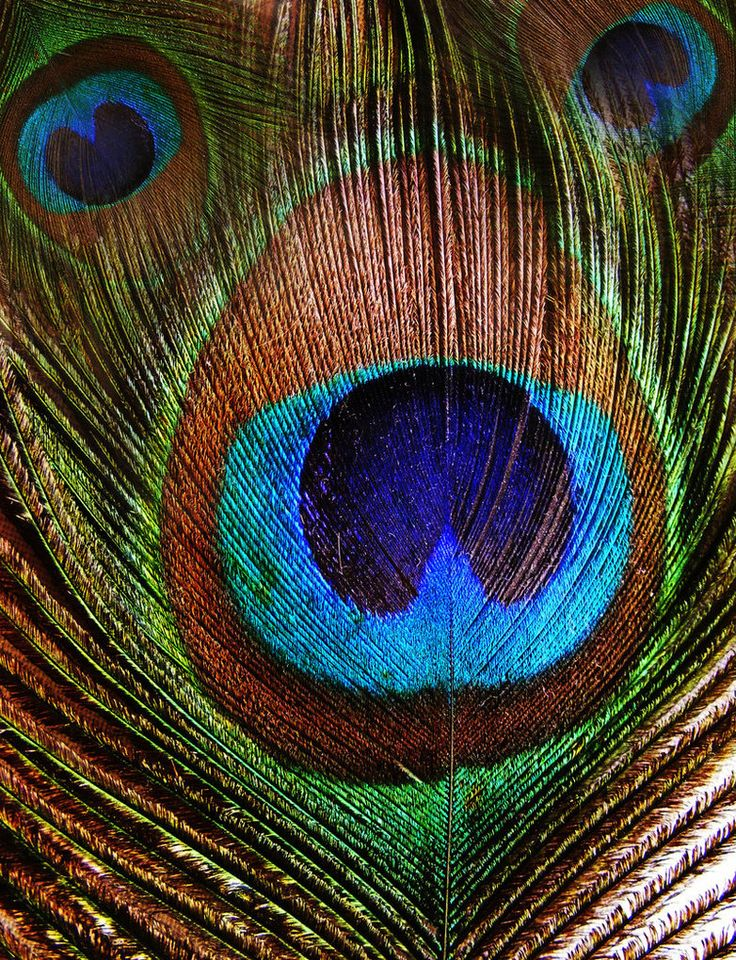 peacock blue and green.  most beautiful color combination ever.