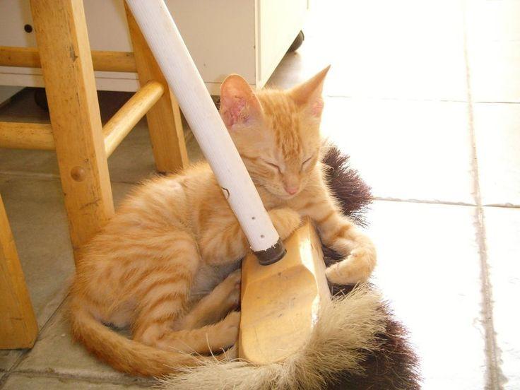 """Een """"ongelukje"""" komt ook voor bij jefavoriete huisdier. Maar urine van katten en honden kan een hardnekkige geur achterlaten. Zo ga je best te werk!"""