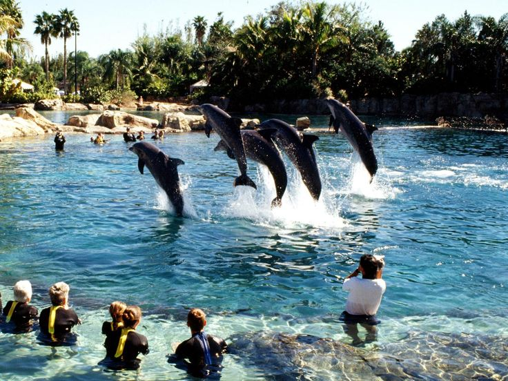 1000 Ideas About Discovery Cove Orlando On Pinterest