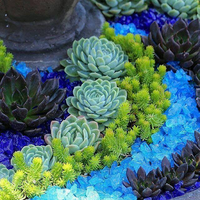 Beautiful succulents and blue glass arrangement. ...
