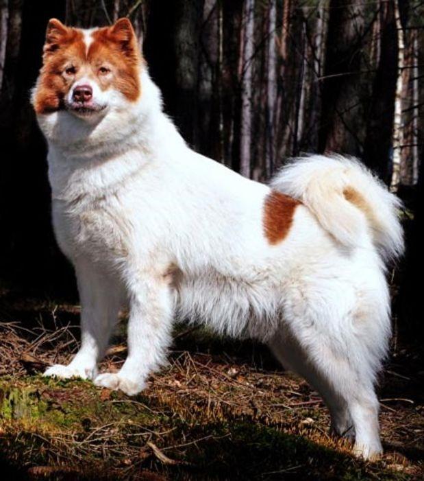 collier pour chien le plus cher du monde