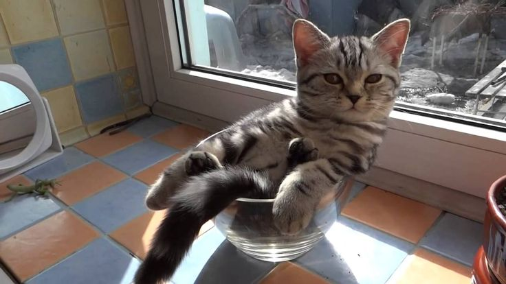 A Drowsy Kitten Lounges Idly in a Glass Bowl - This is video for a REAL kitty, but wouldn't we all like to be this comfy and undisturbed by the outside world?