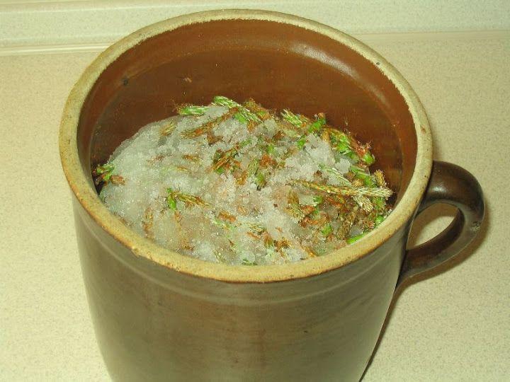 Sok, syrop i nalewka z sosny to idealne, naturalne leki na przeziębienie i inne infekcje górnych dróg oddechowych. Preparaty sosnowe mają działanie bakteriobójcze i wykrztuśne, ułatwiają oddychanie…