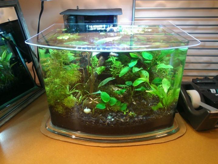 1000 images about freshwater aquarium on pinterest for Plante nano aquarium
