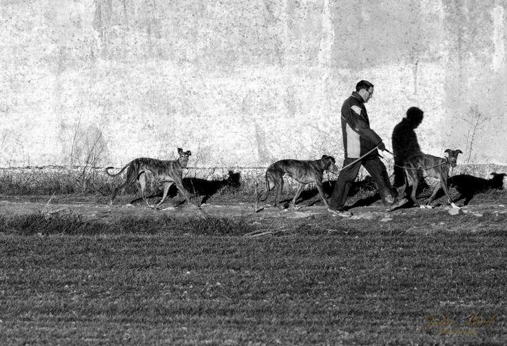 Perros en Villanubla