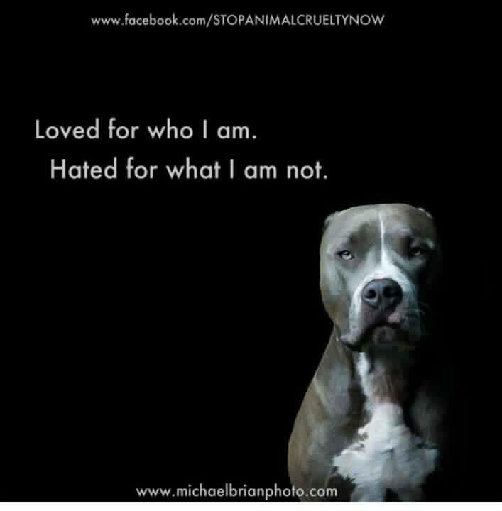 I want a pit bull so much but everyone hates them... A few bad ones (because of bad owners) have ruined it for the wonderful ones.