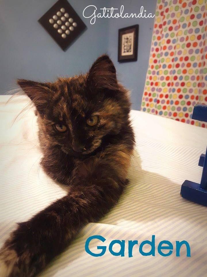 INSTRUCCIONES PARA LOGRAR LA FELICIDAD: 1.- ADOPTA un gato. 2.- ADOPTA un segundo gato, tú y el segundo gato serán más felices.  3.- ADOPTA un tercer gato. MÁS GATOS = MÁS AMOR.  4.- Declara que no adoptarás más gatos, ¡Tampoco estás loco! 5.- Ríndete y adopta un cuarto gato, iba a pasar tarde o temprano!  www.facebook.com/Gatitolandia