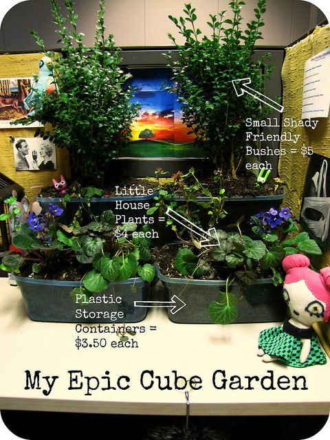 17 best images about desk gardening on pinterest gardens moss terrarium and cubicles - Cubicle planters ...
