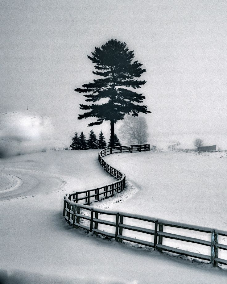 WINTER SNOW BY TATIANA LOPATINA.  VISIT OUR WEBSITE FOR MORE GREAT IMAGES www.lailas.com