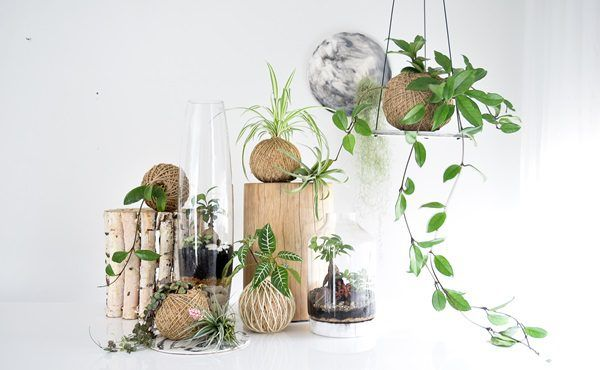 Nature and art combine in new terrarium and indoor plant resin collection by Glasshouse Terrariums and Rachel Bainbridge
