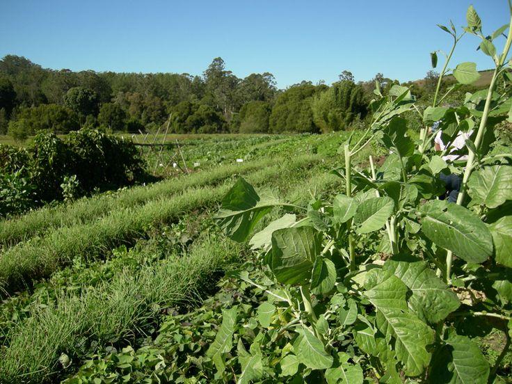 View of Zaytuna farm over the main crop garden
