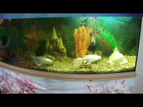 Дизайн аквариума 1