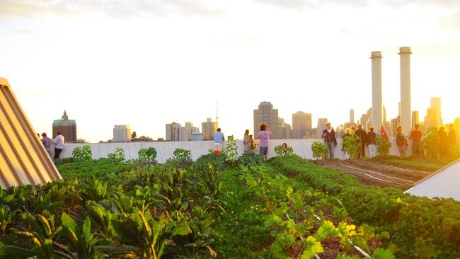 4 Ways Urban Green Spaces Can Benefit The Environment Green Roof