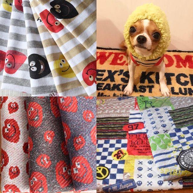 ・・ ・ ・ ・ new生地 さて。この子達をどう料理するかなぁ⤴︎⤴︎♬ ・ ・ ・ ・ ・ ・ ・ ・ ・ #dog#instadog#dogstagram#chihuahua#chihuahuas#kawaii#onlychihuahuas#chihuahuasofinstagram#chihuahualove#chihuahualover#adorable#cutedog#犬#多頭飼い#犬バカ部#犬好き#可愛い#チワワ#鼻ぺちゃ#ロングコートチワワ#ロンチー#わんこ#ふわもこ部#かわいい#わんこ服#犬服#ハンドメイド#ハンドメイド犬服#愛犬#チワワ部