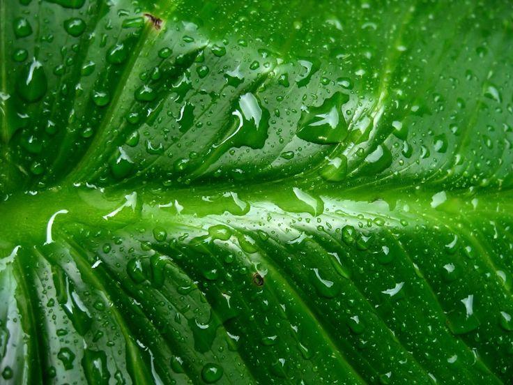 Groene HD Achtergronden | Bureaublad Achtergronden