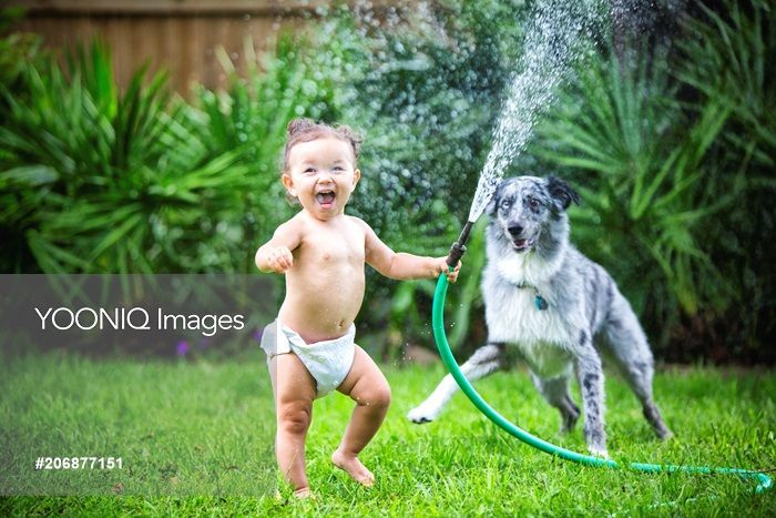 Yooniq images - Toddler girl holding water hose, playing with dog