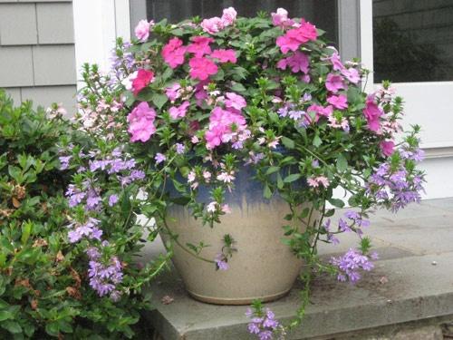 37 best container garden images on Pinterest Flowers Garden