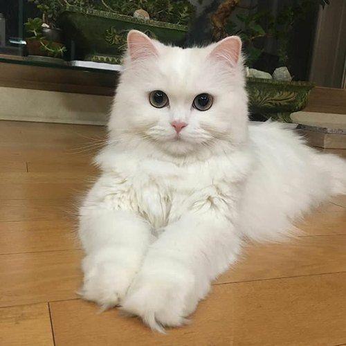 @animaladdicts uploaded by вlacĸ ѕυgar on We Heart It