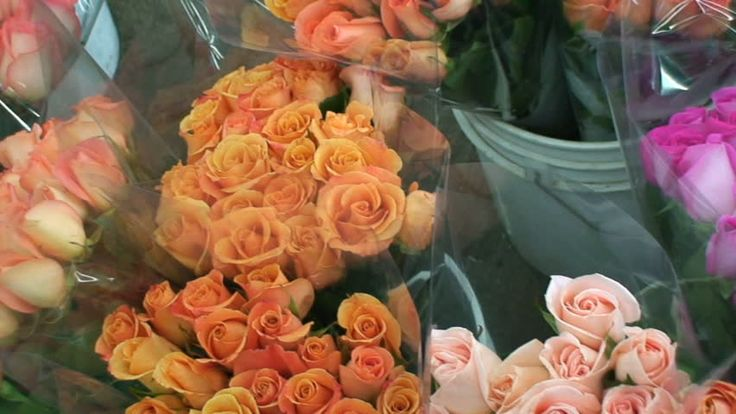 https://www.scout.org/user/397296/about  Web Site For Best Florist San Francisco  Flower Delivery San Francisco,Sf Flower Mart,San Francisco Flower Delivery,Flower Mart Sf,Florists San Francisco