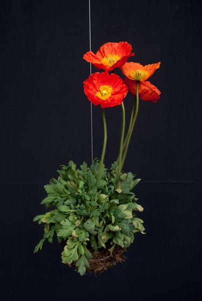 stringplants.com | Aprenda como fazer seu jardim suspenso!