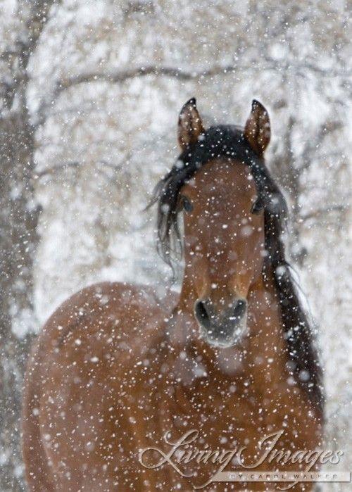snow horse: Beautiful Horses, Horses Part, Winter, Horses In Snow, Animals Pets, Beautiful Animals, Horse Art