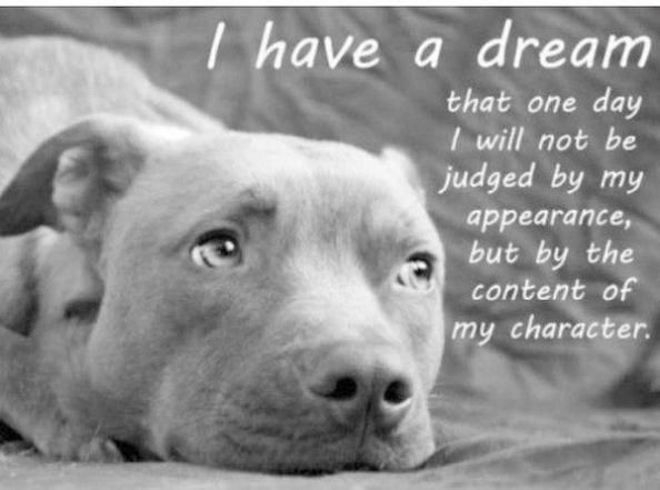 Pit Bull Mix Puppies :) #pitbull #PitBullPics