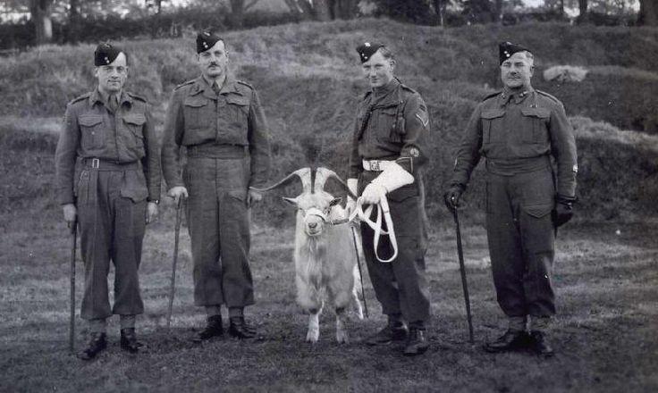 8 RWF Swanage 1943 CO Sir H. Tate, Adjt Capt Mostyn, Goat Maj J. Owen and RSM J. Cutler