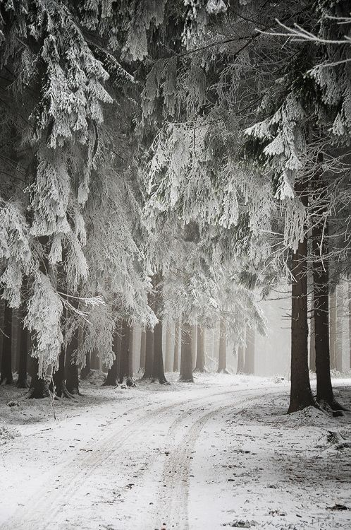 Beautiful forest in snow , Vogtland, Saxony, Germany