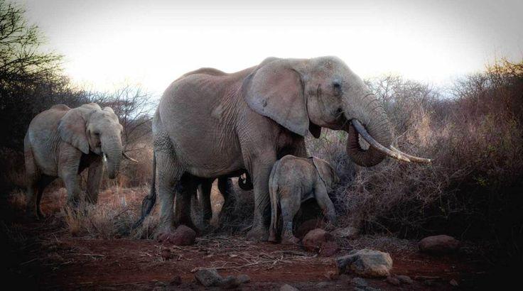 Amboseli - on safari in Kenya