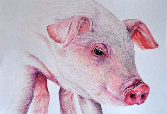 how to draw a realistic piglet