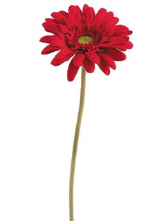 "21.5"" Red Artificial Gerbera Daisy 