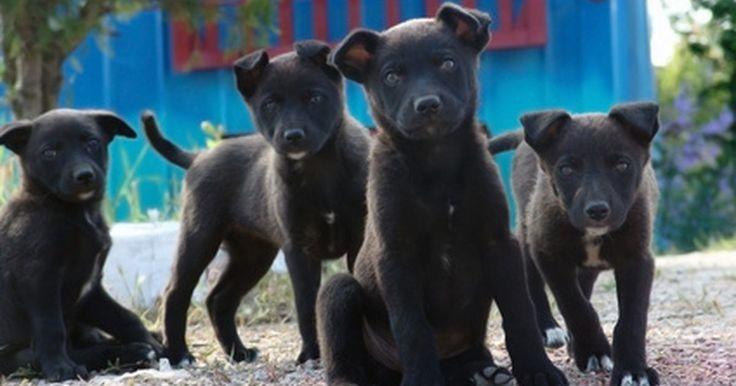 Convulsões caninas em filhotes. Convulsões em filhotes podem ser eventos terríveis. Elas podem assustar tanto os donos quanto, obviamente, os próprios cachorros. Embora convulsões possam ser traumáticas, elas não sinalizam o fim de uma vida feliz e saudável para o cachorrinho. Com vigilância e cuidados apropriados, um filhote que sofre de convulsões pode ser um cachorro feliz e ...