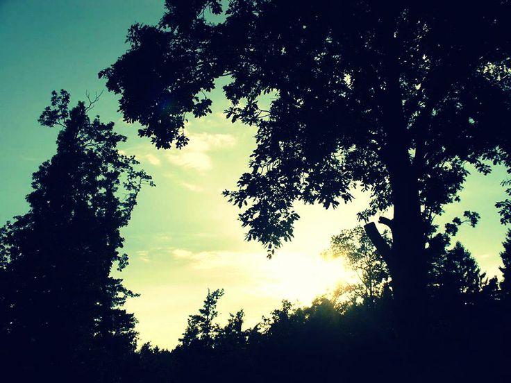 Sunny night #sunny #night
