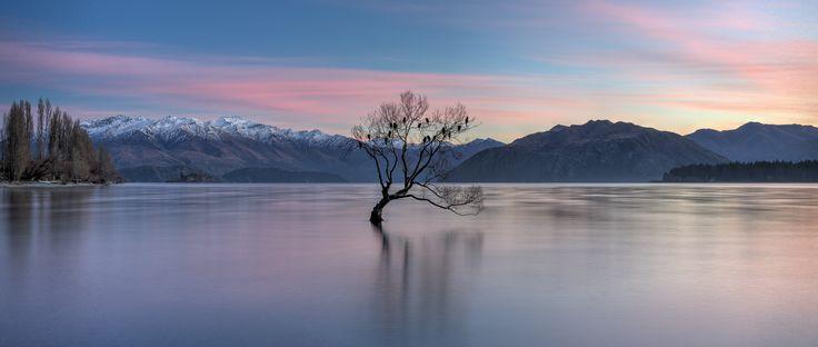 Wanaka Lone Tree, South Island