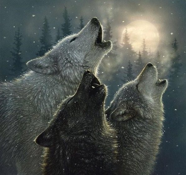 .Wolves howling at the moon | Let it all out! | Pinterest ...